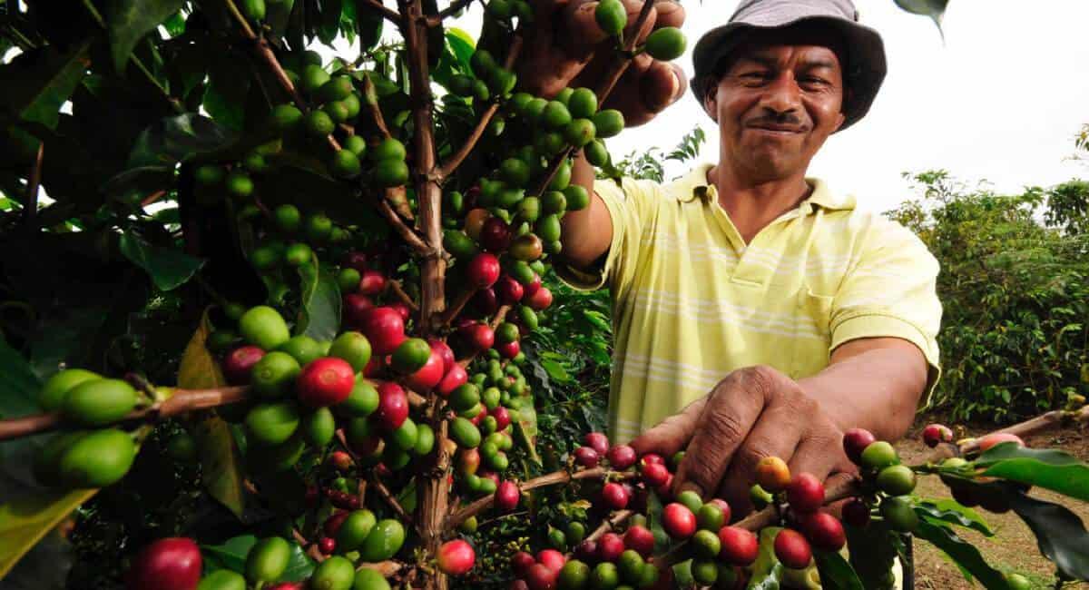 kaffeplukker fra colombiansk kaffeplantage